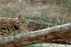 Cochahuasi Animal Sanctuary (3)
