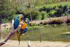 Cochahuasi Animal Sanctuary (7)