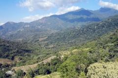 Minca - góry Los Pinos