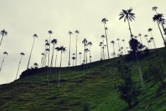 Valle de Cocora (5)
