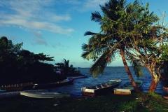 Porcik w Pearl Lagoon