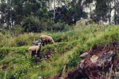 W drodze do Urquillos