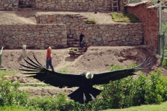 Cochahuasi Animal Sanctuary (4)