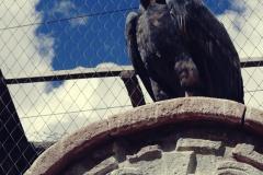 Cochahuasi Animal Sanctuary (5)