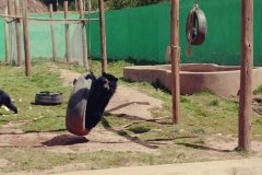 Cochahuasi Animal Sanctuary (8)