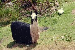 Cochahuasi Animal Sanctuary (9)
