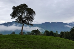 Valle de Cocora (2)