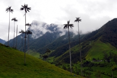 Valle de Cocora (3)