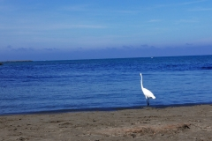 Plaża Bocagrande w Kartagenie