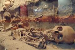 Muzeum antropologiczne (4)