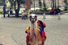 Bogota - lama pod Museo de Oro