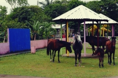 Konie na betonie